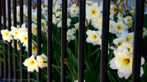 blog-prisonflowers-500x280